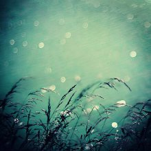 Dark Water / ............