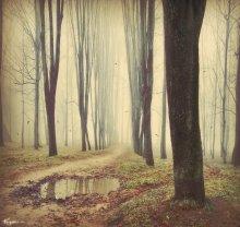 Nebel / ......