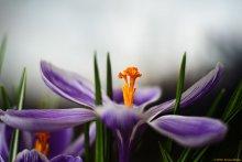 Der Frühling ist gekommen / ***