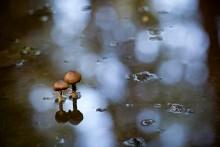 Monsun / ***