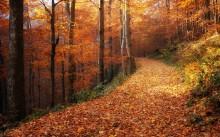 Herbstlichr Wald ... / ***