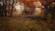Herbststimmung / ***