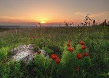 Evening Blumen. / ***