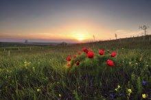 Sonnenuntergang Bouquet. / ***
