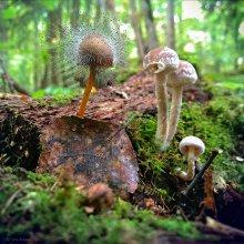 In den herbstlichen Wald / ***