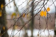 Herbst weinen / ***