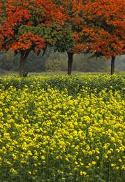 FARBEBSPIEL / Ich meine, solche Farben kann nur die Natur. Gesehen auf dem Land bei Dülmen im Münsterland.