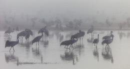 In dem weißen Nebel / ***