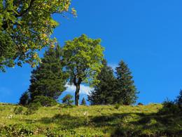 Herbst im Karwendel / Auf dem Panoramaweg von der Eng Alm zur Binsalm ca 2,5 Stunden die herrliche Landschaft genießen.