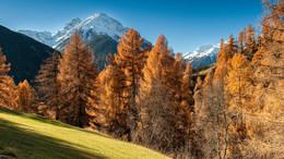 Herbst im Engadin / ---