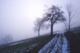 Unter der Nebelgrenze / ---