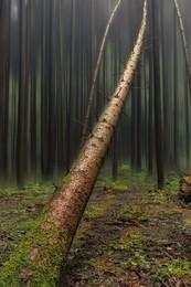 Achtung - Baum fällt / Photoshop Spielerei um aus einem Schnappschuss ein Bild zu erzeugen.