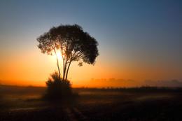 | SILENCE MORNING | / Im Sonnenaufgang eine Gegenlichtaufnahme. Ort: Mecklenburg-Vorpommern