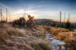 Sonnenaufgang im Plöckensteiner Wald / Die Aufnahme entstand während einer Foto-Wanderung vom Dreisessel zum Plöckenstein.