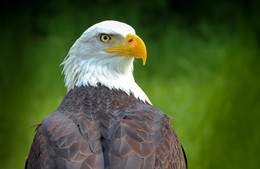| EAGLE | / wildlife