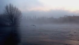 Graureiher im Morgengrauen / Früh morgens an der Ruhr im Nebel.