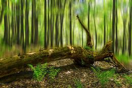 Mystischer Wald / Experiment mit Photoshop