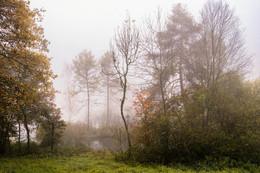 Nebelmorgen im Moor / ***