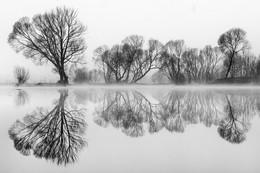 Spiegelung in B&W / Morgens bei Nebel an eunen kleinen Teich in der steiermark .