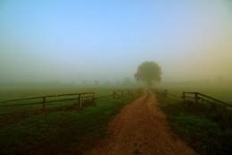 foggy morning / Mecklenburg-Vorpommern. An einem schönen Sommermorgen im September 2016 fotografiert.
