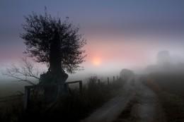 foggy Landscape / Mecklenburg-Vorpommern