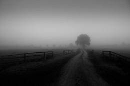 foggy Day / Mecklenburg-Vorpommern