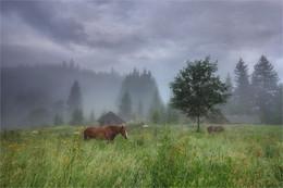 Pferde / ***