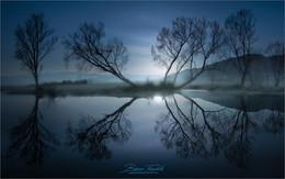 Baumspiegelung / Abends am Rattenberger Teich in der Steiermark.