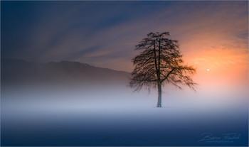Lärche im Winterkleid / Morgens an einen ruhigen Ort in der Obersteiermark.