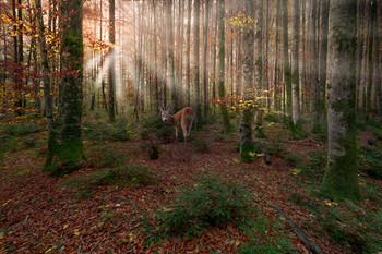 Composing / Morgens im Zauberwald am Offensee. Composing aus zwei Bilder