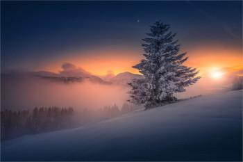 Weihnachtsbaum / Abends in den Seetaler alpen in der Steiermark
