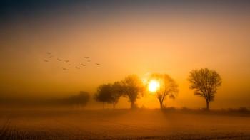 foggy morning / Landscape