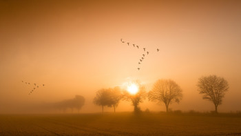 flying geese / Landscpe/wildlife