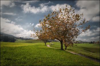 Herbst / Kirschbaum
