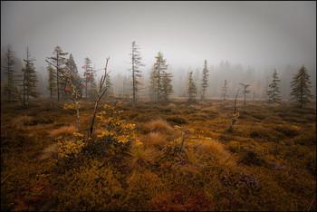 Hochmoor / Herbstzeit