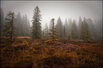 Heide / Moor