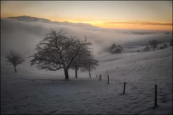 Apfelbaum / Im Nebel