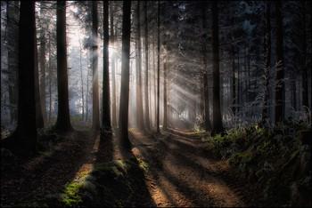 Strahlen / Winterwald