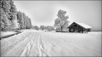 Raureif / Wintertag